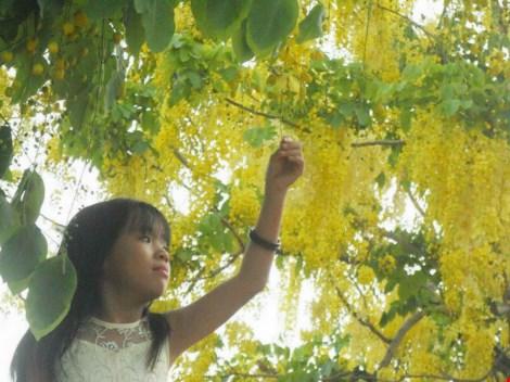 Xôn xao mùa hoa bò cạp giữa Sài thành - 3