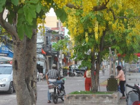 Xôn xao mùa hoa bò cạp giữa Sài thành - 5
