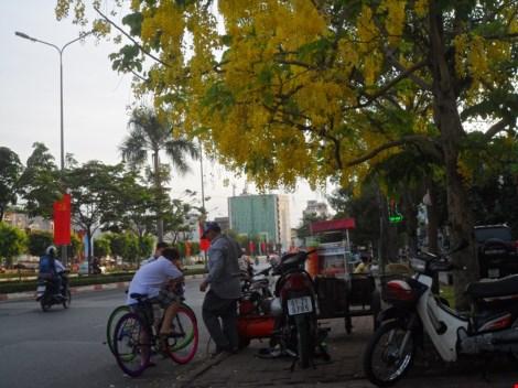 Xôn xao mùa hoa bò cạp giữa Sài thành - 10