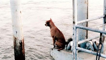 'Cô chó' chờ chủ gây sốt cộng đồng mạng Thái Lan - 1