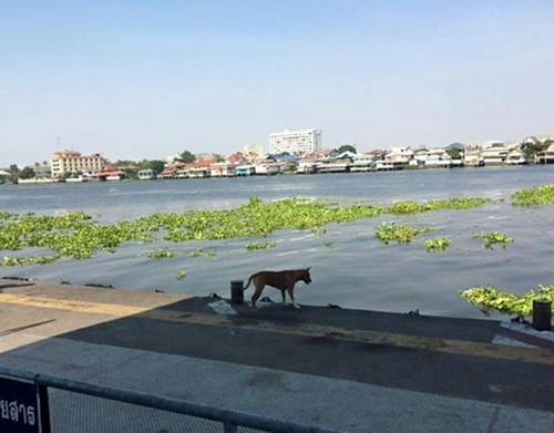 'Cô chó' chờ chủ gây sốt cộng đồng mạng Thái Lan - 2