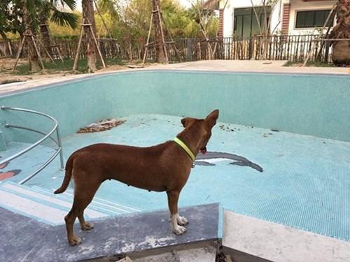 'Cô chó' chờ chủ gây sốt cộng đồng mạng Thái Lan - 3