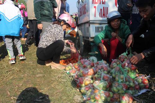 """Lễ hội ném cà chua Thanh Hóa """"gặp khó"""" vì cà chua tăng giá - 8"""