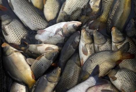 Ăn quá nhiều cá khi mang thai khiến bé dễ bị tiểu đường - 1