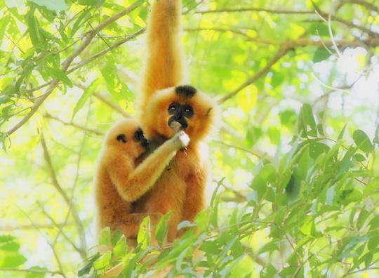 Vào vườn quốc gia Cát Tiên xem voọc mắc cỡ - 3