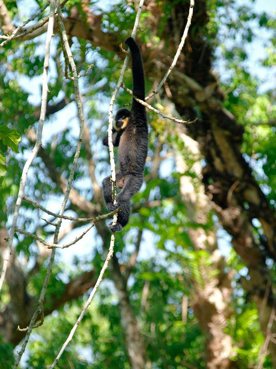 Vào vườn quốc gia Cát Tiên xem voọc mắc cỡ - 5