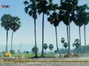 Du lịch Việt Nam - Du xuân ở xứ sở cây thốt nốt Việt Nam