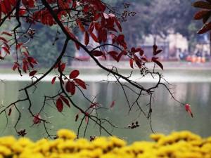 Tin tức trong ngày - Ảnh: Hà Nội đẹp ngỡ ngàng mùa lá đỏ