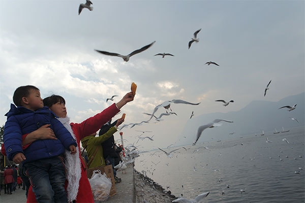 Trú đông ở hồ Điền Trì - Côn Minh - 1