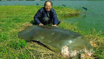 Bảo quản lâu dài xác rùa Hoàn Kiếm - 1