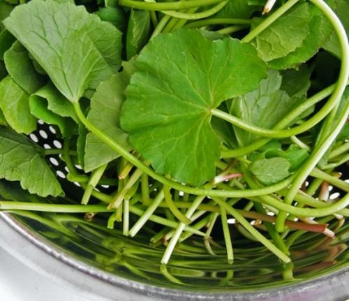 Nguy hại của những loại rau nhà bạn vẫn ăn hằng ngày - 4