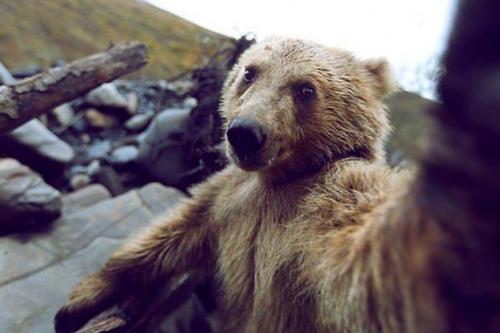 """15 khoảnh khắc cho thấy động vật cũng mê mẩn """"selfie"""" - 2"""