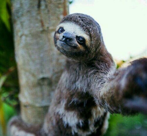 """15 khoảnh khắc cho thấy động vật cũng mê mẩn """"selfie"""" - 7"""