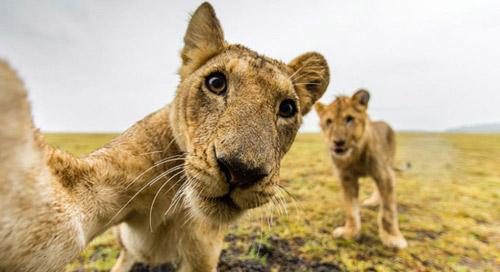 """15 khoảnh khắc cho thấy động vật cũng mê mẩn """"selfie"""" - 15"""