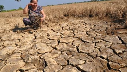 Nước mắt trên những cánh đồng nứt toác - 1