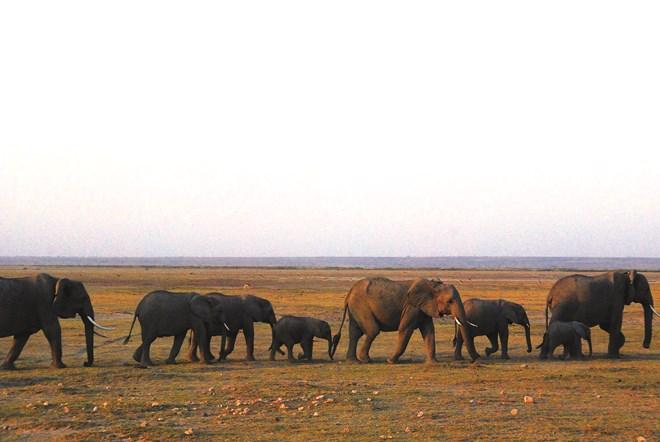 Theo chân thú hoang ở châu Phi - 2