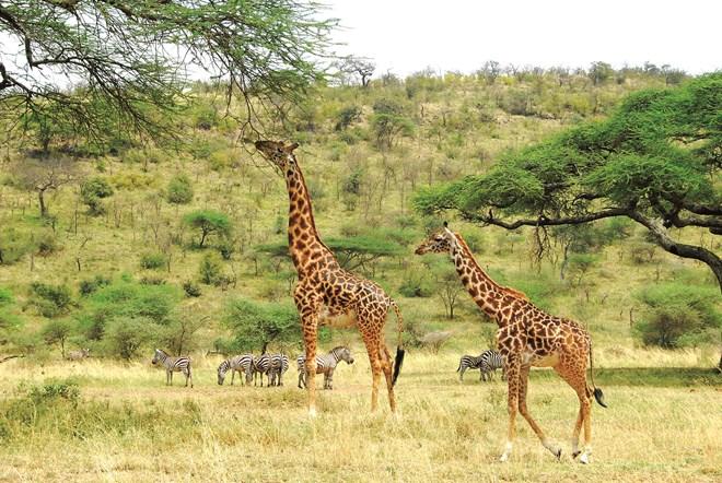 Theo chân thú hoang ở châu Phi - 1