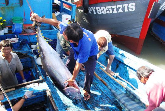 Tư thương ép giá cá ngừ đại dương - 1