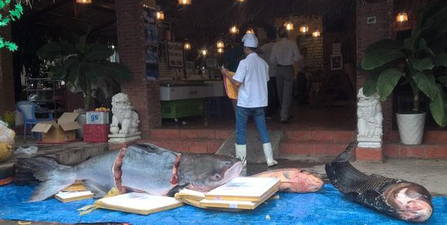 """4 con cá siêu khủng """"bơi"""" về Sài Gòn - 1"""