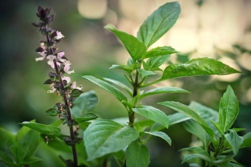 5 mẹo tự nhiên khử mùi hôi vùng kín hiệu quả sau 5 ngày - 3