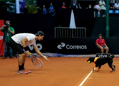Hài hước: Những chú chó nhặt bóng cực chuyên nghiệp - 1