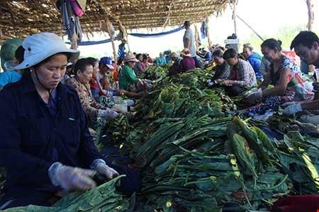 Nhộn nhịp xóm thuốc lào Sài Gòn - 1