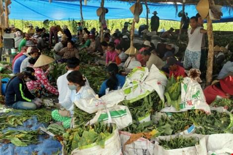 Nhộn nhịp xóm thuốc lào Sài Gòn - 11
