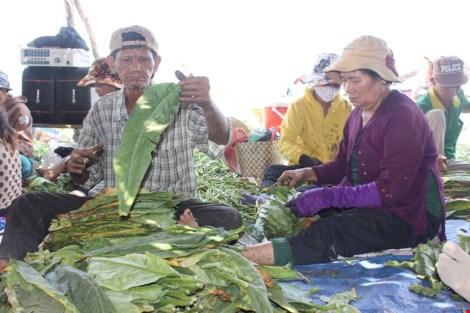 Nhộn nhịp xóm thuốc lào Sài Gòn - 12