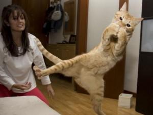 """Bạn trẻ - Cuộc sống - Phì cười với những màn nhảy """"khó đỡ"""" của mèo cưng"""