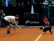 Thể thao - Hài hước: Những chú chó nhặt bóng cực chuyên nghiệp