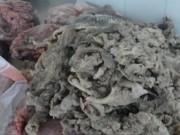 Video An ninh - Chặn xe khách giấu 200 kg nội tạng thối dưới gầm