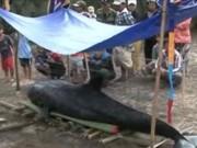 Video An ninh - Cá lạ nặng hơn 300kg dạt vào bờ biển Quảng Ngãi