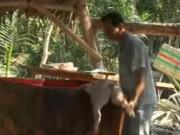 Video An ninh - Kinh hãi xem cảnh xẻ thịt heo bệnh, heo chết