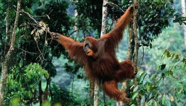 Qua đêm trên đỉnh núi lửa, trải nghiệm chỉ có ở Sumatra - 2
