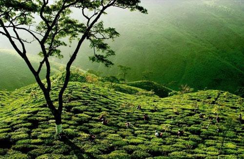 """""""Điêu đứng"""" trước 10 điểm du lịch đẹp nhất Ấn Độ - 9"""
