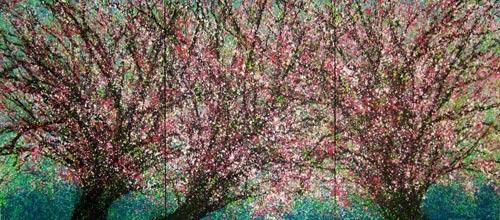 Bức tranh của họa sĩ Việt được Apple treo khắp thế giới - 4
