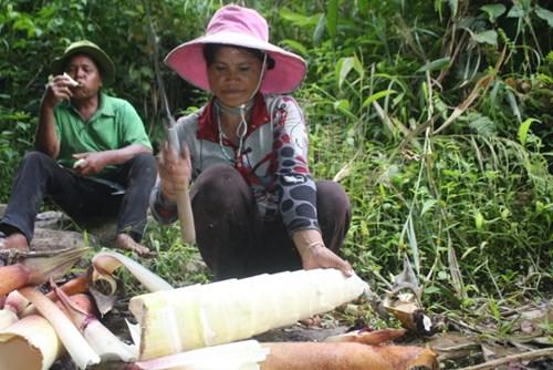 Cận cảnh loài tre khổng lồ, báu vật trên núi cao Quảng Nam - 9