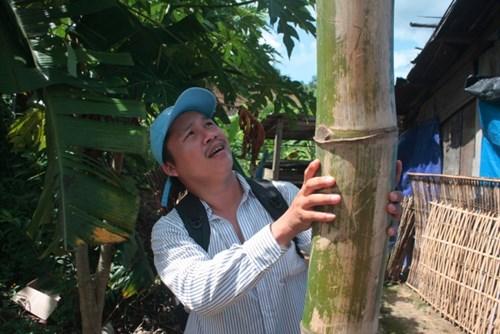 Cận cảnh loài tre khổng lồ, báu vật trên núi cao Quảng Nam - 13