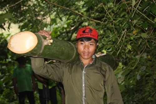 Cận cảnh loài tre khổng lồ, báu vật trên núi cao Quảng Nam - 4