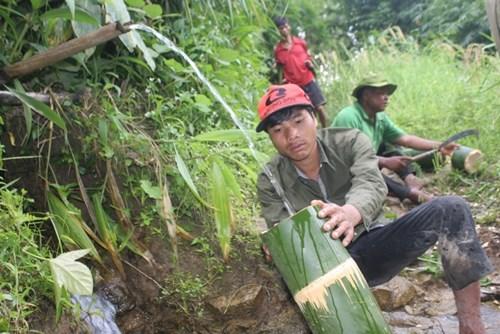 Cận cảnh loài tre khổng lồ, báu vật trên núi cao Quảng Nam - 8
