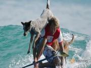 Clip Đặc Sắc - Thi chó lướt ván: Lạ lùng và đầy nhân văn