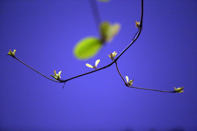 Hà Nội đẹp lãng mạn trong mưa bụi tháng Giêng - 13