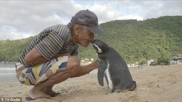 Chim cánh cụt bơi 8.000 km về thăm ân nhân - 1