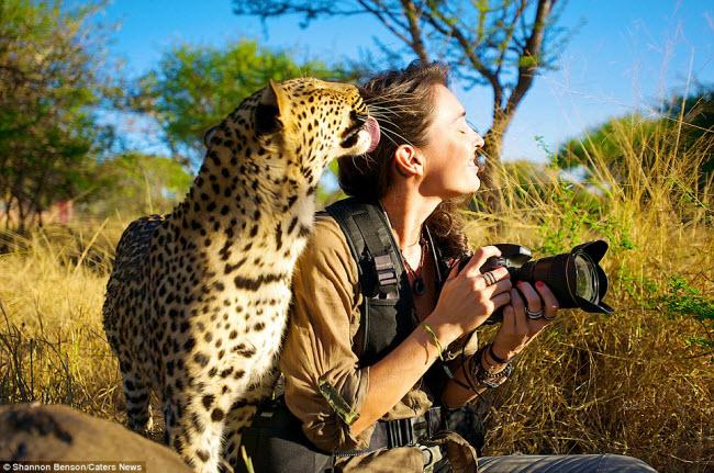 Với niềm đam mê đặc biệt với những loài động vật hoang dã, nữ nhiếp ảnh gia Shannon đã dành hơn một năm để khám phá cuộc sống của chúng tại các vườn quốc gia ở Nam Phi.