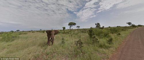 Xem vườn thú safari lớn nhất Nam Phi qua ứng dụng Google - 1