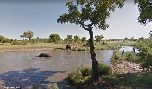Xem vườn thú safari lớn nhất Nam Phi qua ứng dụng Google - 2