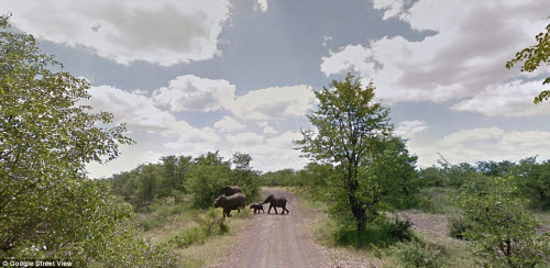 Xem vườn thú safari lớn nhất Nam Phi qua ứng dụng Google - 4