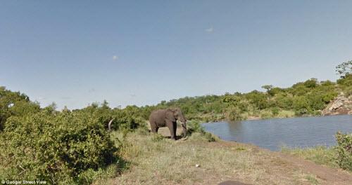 Xem vườn thú safari lớn nhất Nam Phi qua ứng dụng Google - 6
