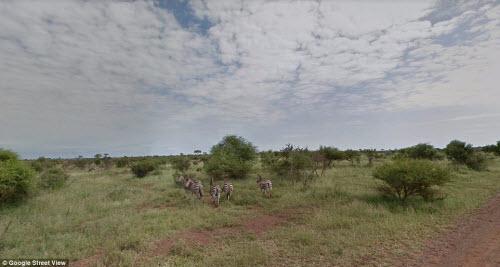 Xem vườn thú safari lớn nhất Nam Phi qua ứng dụng Google - 8