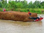 Thị trường - Tiêu dùng - Hạn hán khốc liệt, dân miền Tây phải bán bò giá rẻ bèo